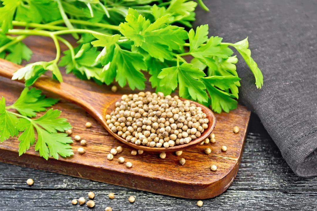 Cuchara de madera con semillas de cilantro